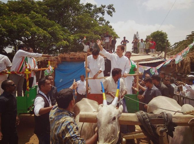 All India Congress Committee president Rahul Gandhi rides a bullock cart during a protest against hike in the prices of petroleum products in Malur on Monday. DH Photo