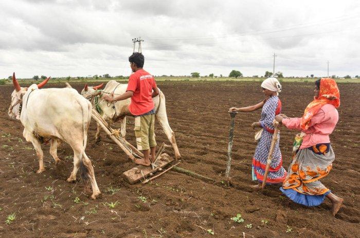 Farmers plough and sow green gram seeds near Bhosga village on Aland Road in Kalaburagi taluk. DH Photo/ Prashanth HG