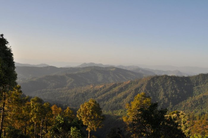 A view of the forest in Kumaon