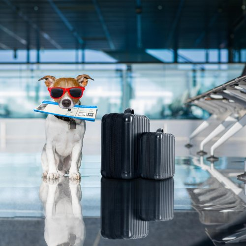 Your pets need not be left back when you head out of town. Pet relocation is possible now.