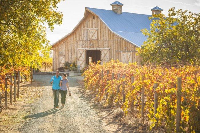 Amador Cellars Vineyards