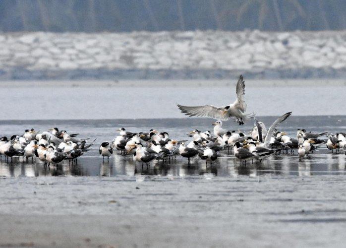 Kundapura birds