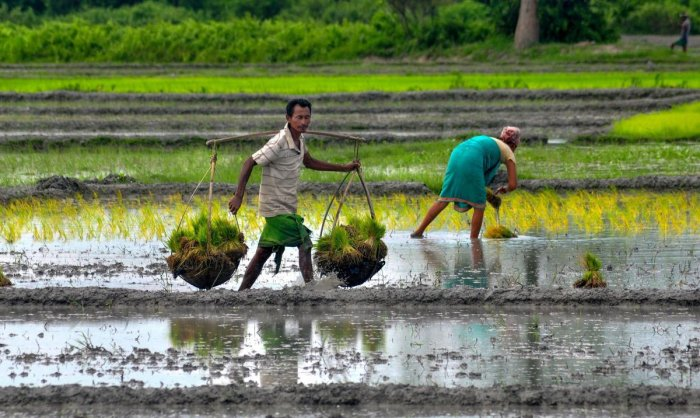The agriculture ministry issued the first advance estimates of major Kharif crops for 2018-19 on Wednesday, which shows a year-on-year rise of 1.74 million tonnes in rice production to 99.24 million tonnes and of 1.23 million tonnes in maize to 21.47 mill
