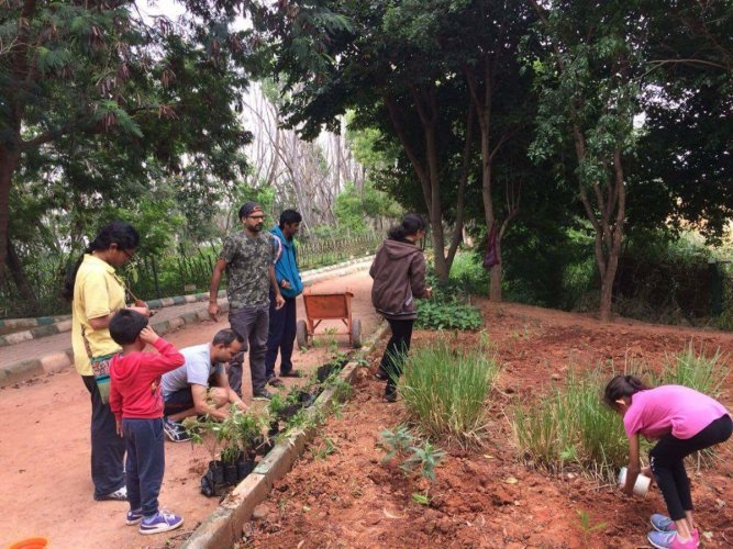 A new Butterfly Park is mushrooming in Kaikondrahalli lake premises, in East Bengaluru. Thanks to local volunteers and activists that conceived the idea and setting it in motion.