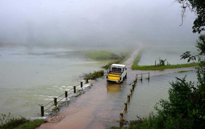 With the rain, the inflow of water to river Bhadra and its tributaries have increased. The rain also watered paddy fields. (DH File Photo)