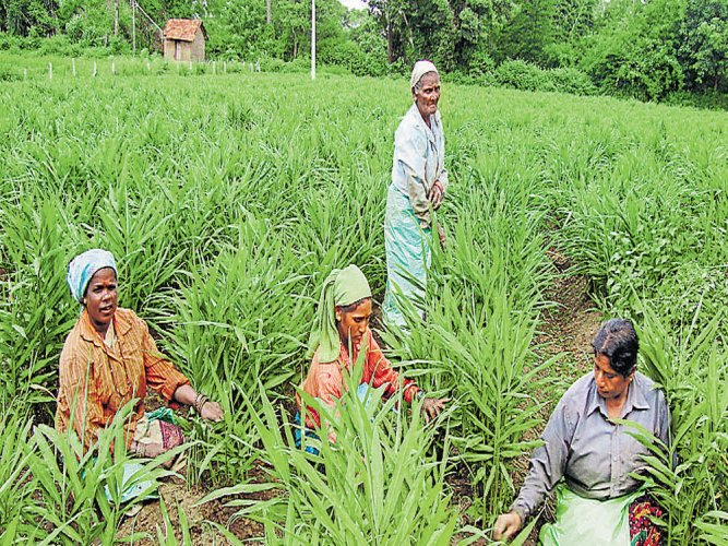The crop survey will help the government to compile accurate information on crop production and assess crop loss. (DH File Photo)