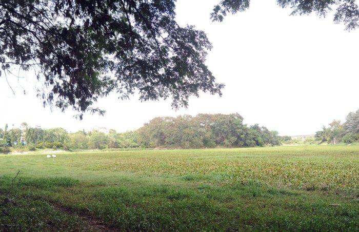 Kengeri lake. DH photo.