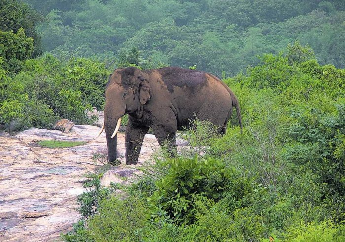 With the death of elephant Ranga, the demand for shifting jumbo camps outside the forests has grown stronger.
