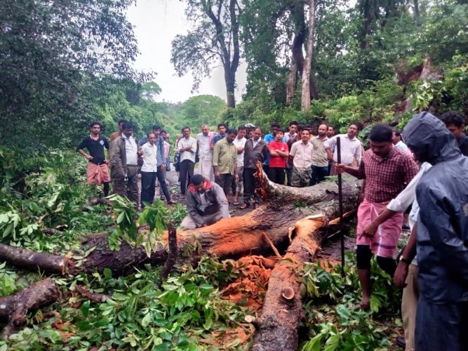Home Guards, Forest Department officials and citizens struggle to remove a tree that fell on the road at Kumbhakkodu in Aletti of Sullia taluk, blocking traffic.
