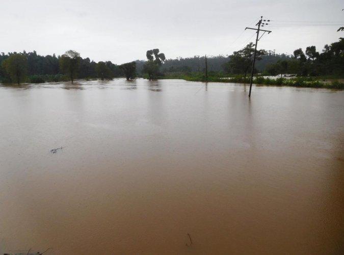 Paddy fields have been inundated at Ramakkanahalla in Mudigere taluk.