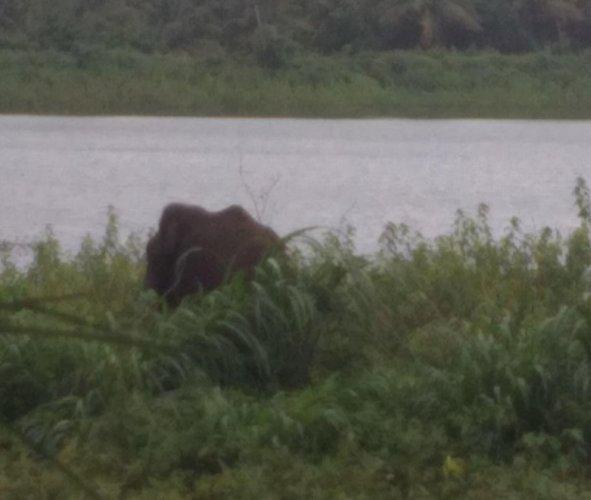 A wild elephant was spotted at Hirekaturu village in Tarikere taluk, on Monday.