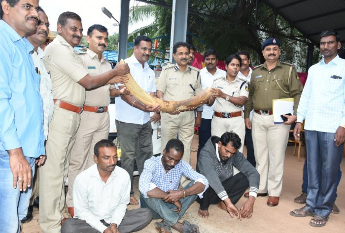 Police officials with the tusk recovered and the arrested, in Hubballi on Friday.