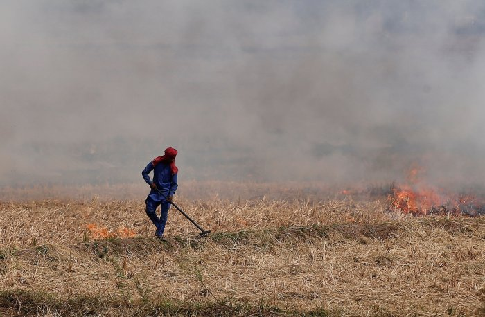 A farmer burns stubble in a rice field in Zirakpur in Punjab. REUTERS
