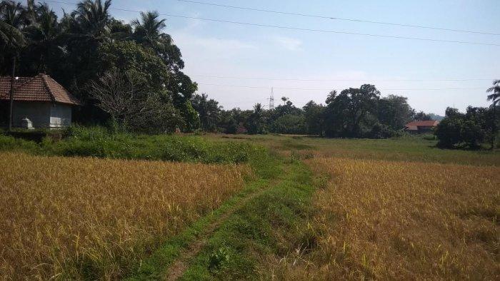 The houses in Badakere, Koladabadi and Devandabettu do not have road connectivity.