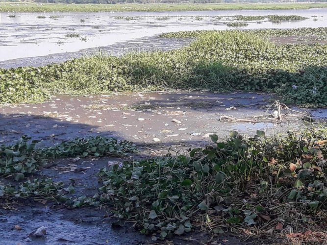 The residents pointed out that the black effluents floating on the Bellandur lake on Sunday could be raw sewage or industrial effluents. DH Photo