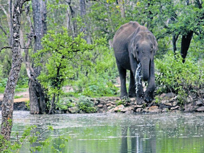 Masini's freedom came in the form of an order by the Madurai bench of the Madras High Court which was hearing a petition seeking her transfer from a temple to an elephant camp in Theppakadu in the Nilgiris. (Image for representation)
