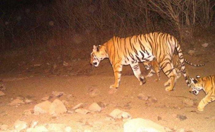 Union minister for women and child development and animal rights activist Maneka Gandhi has taken strong exception to the killing of tigress Avni.