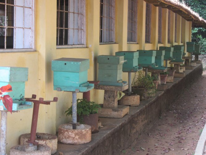The beehives kept outside the Government Apiculture Training Centre at Bhagamandala.
