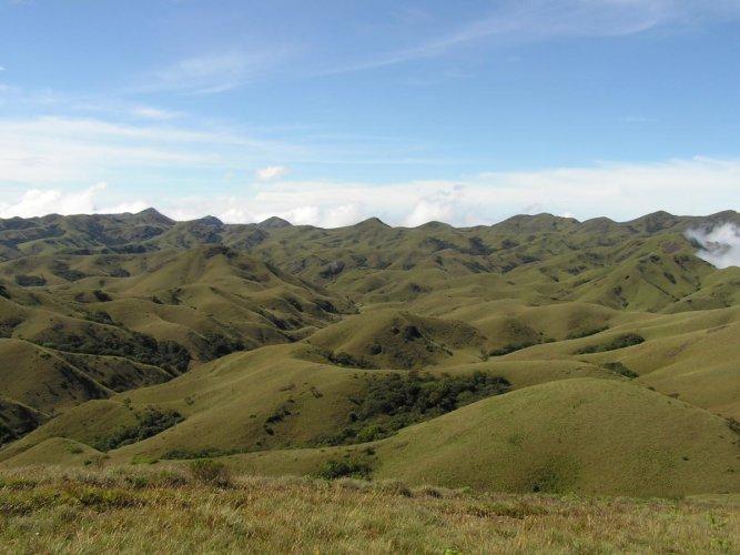 Unique ecosystems: Montane sholas and grasslands in the Nilgiris hill range. wikimedia commons