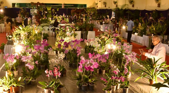 Visitors at the Orchid Show organised by the Orchid Society of Karnataka at Lalbagh on Sunday.