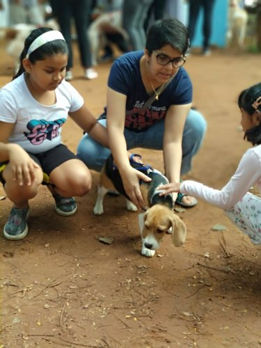 Pet parents learnt tips on how to care for their dogs.