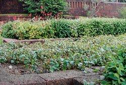 Open toilet makes way for medicinal plants garden