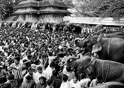 Elephants turn money-spinners