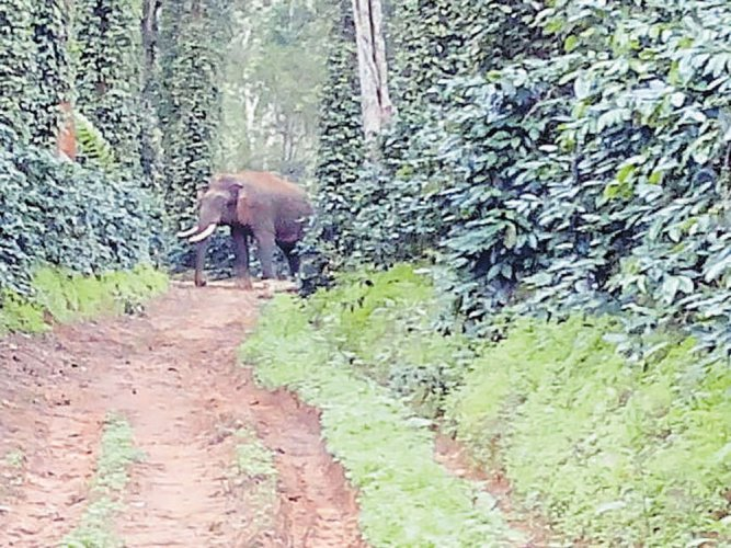 The officials are working towards hiring temporary staffers to create fire lines, control forest fire and work towards driving elephants back to the forest.