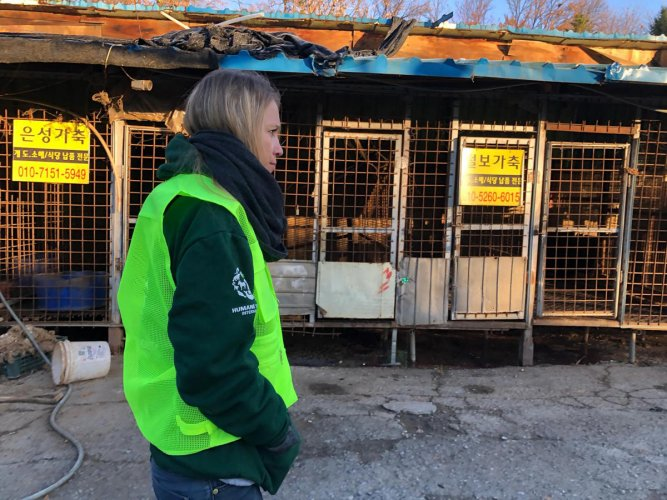 A handout photo taken and received on November 22, 2018 by US-based animal rights group the Humane Society shows cages at the Taepyeong-dong dog slaughterhouse complex in Seongnam city, south of Seoul. (AFP Photo/ Humane Society)