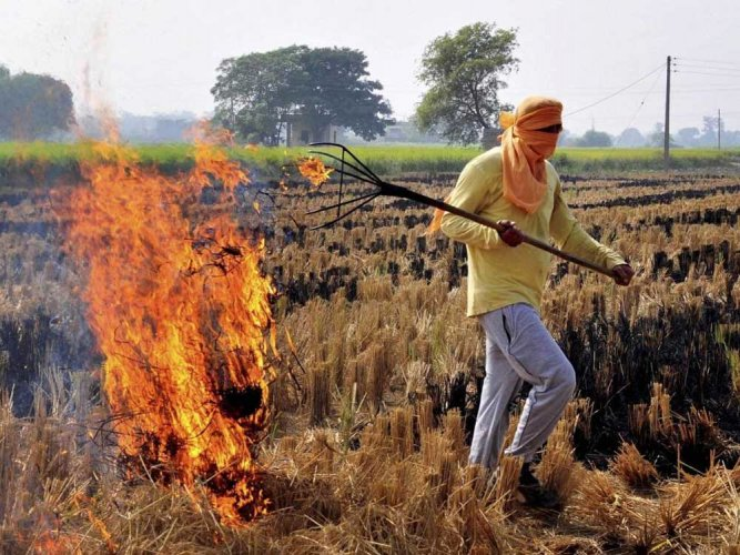 The Centre is mulling over making use of crop residue mandatory in thermal plants for generating electricity and, thereby, reducing air pollution from stubble burning. PTI file photo for representation.