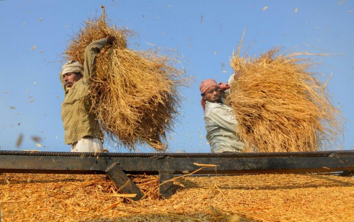 Farmers across the Gwalior-Chambal region are angry with both the Modi and Shivraj government for their failure to ensure right prices for their crops and appear to have made up their mind to usher in change. PTI file photo