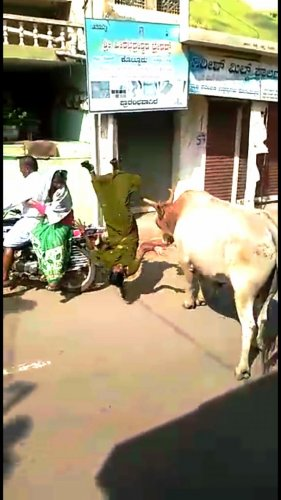 A bull belonging to Kottureshwara Temple goes on a rampage and tosses a woman into the air in Kottur, Ballari district.