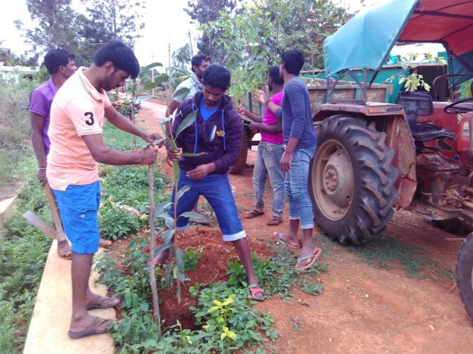 Motivated: Hittalahalli villagers planting saplings on the roadside. photo by author