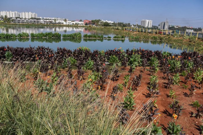 The all-new Hebbagodi Lake. (DH Photo/S K Dinesh)