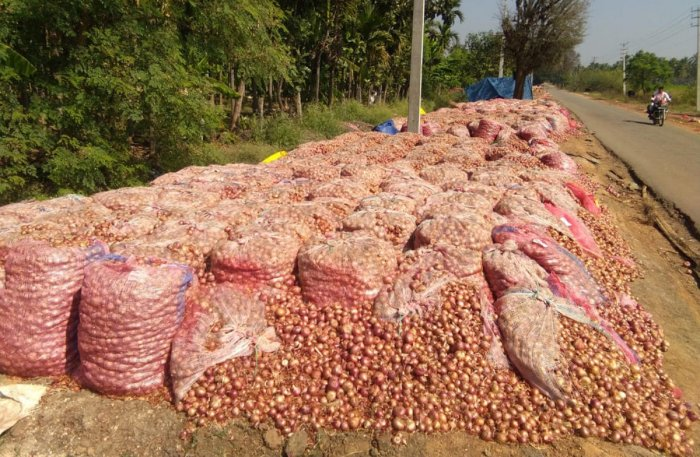 Onions stored in bags beside Shivani-Bukkambudhi Road.
