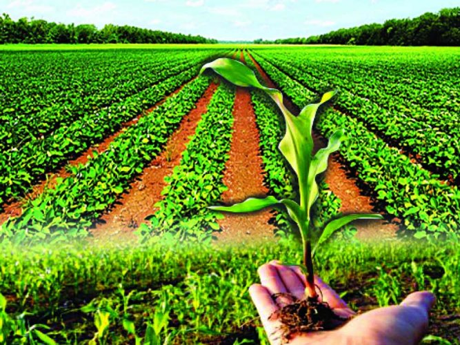 The Cabinet also decided to remove all export restrictions on organic and agro-processed food products under the first ever agriculture export policy in the country which aims to double farm sector exports to $60 billion by 2022.