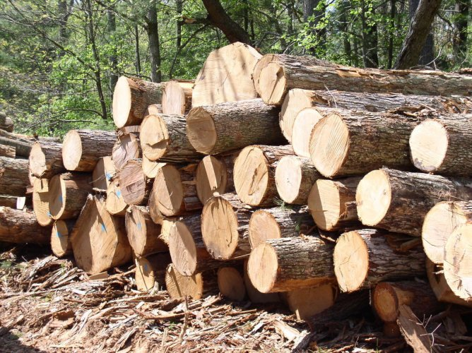 There is a need to understand the customer behaviour and what type of wood is required in which season and the quantity required.