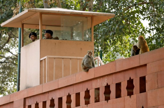 Monkeys sit atop a wall next to a security personnel keeping guard, at India's Parliament premises in New Delhi, India, November 15, 2018. Picture taken November 15, 2018. REUTERS/Anushree Fadnavis