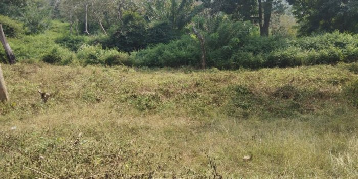 Bushes and weeds have been cleared to draw fire lines at Bandipur Tiger Reserve in Gundlupet taluk, Chamarajanagar district. DH photo