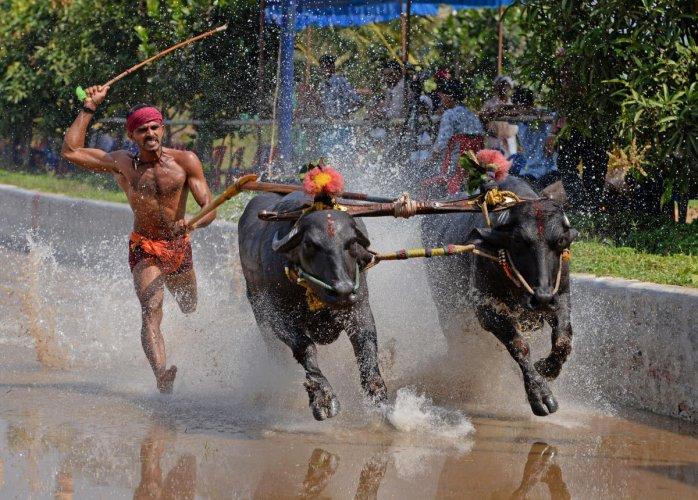 A DH file photo of the Jodukare Kambala organised at Vamanjoor, Dakshina Kannada.