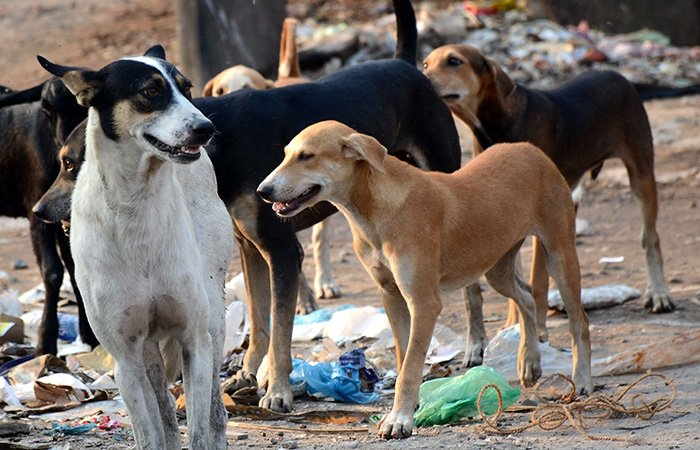 Residents in Uttar Pradesh's Sitapur district have killed around a dozen dogs after 20 children were mauled to death by the canines in different parts of the district in the past few days.