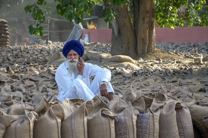 The foodgrain production this year will be a record 279.51 million tonnes. PTI file photo