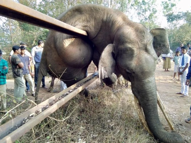 The elephant died in an attempt to cross the railway track fence in Veeranahosahalli forest. Credit: DH Photo
