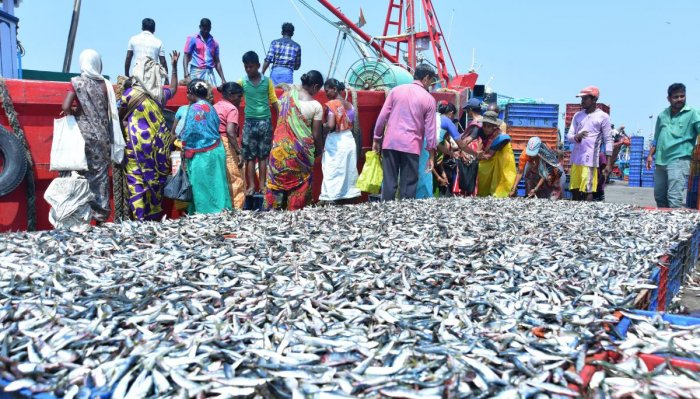 Hundreds of trucks carrying fish from Dakshina Kannada, Udupi and Uttara Kanara districts to Goa are stranded in Karwar and Majali checkposts in Uttara Kannada district after being rejected by Food and Drugs Administration (FDA) in Goa on the grounds that fish caught in Karnataka's fishing jetties were adulterated with formalin. DH file photo