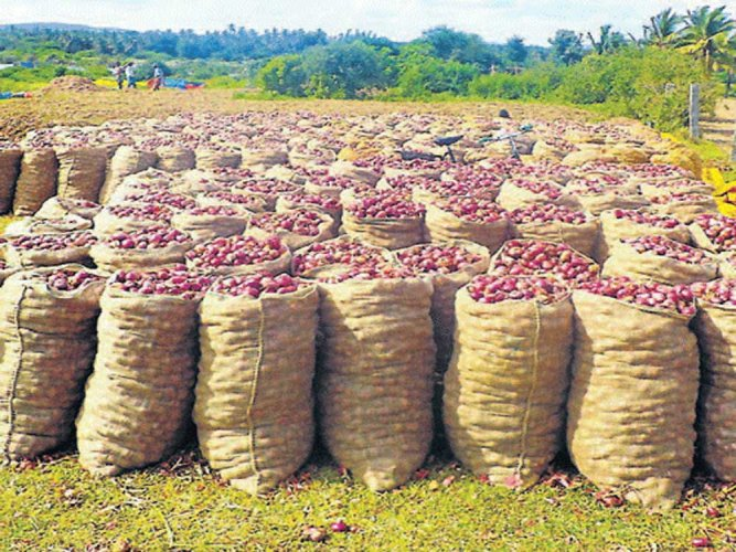 Maharashtra is one of the major onion grower states in the country and both the Centre and the state government want to avert onion crisis as opposition parties have decided to raise the farm distress issue to corner the ruling dispensation in the ongoing winter session of Parliament. DH file photo