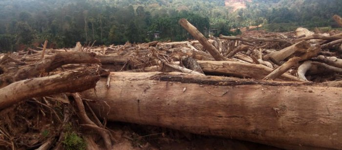Trees that were uprooted on the farmers land in Kodagu district.