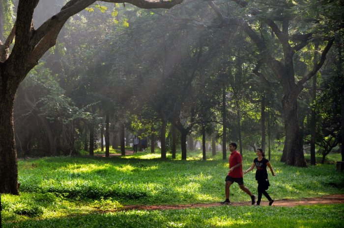 Spend some quality time at Cubbon Park.