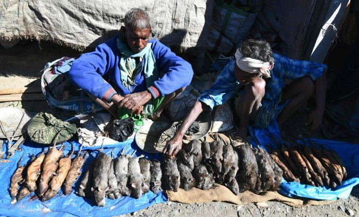 In this file photo taken on December 23, 2018 Indian tea-tribe vendors sell cooked and uncooked rats at a weekly market in Kumarikata village along the Indo-Bhutan border, some 90km from Guwahati. (AFP Photo)