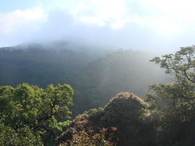 Mist-covered Mullayanagiri