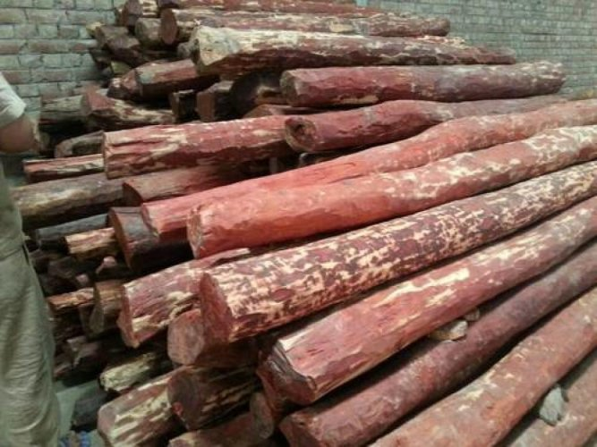 Red sanders is an endangered species of flora protected under the Convention of International Trade in Endangered Species of Flora and Fauna.